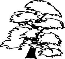 Cédrus logo